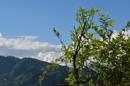 Nature by tashi