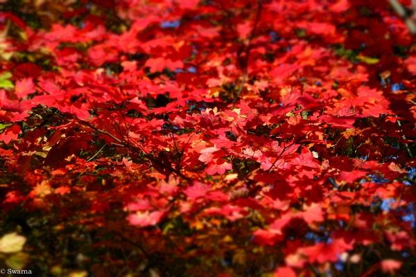 Fall Colours III by Swarnadip