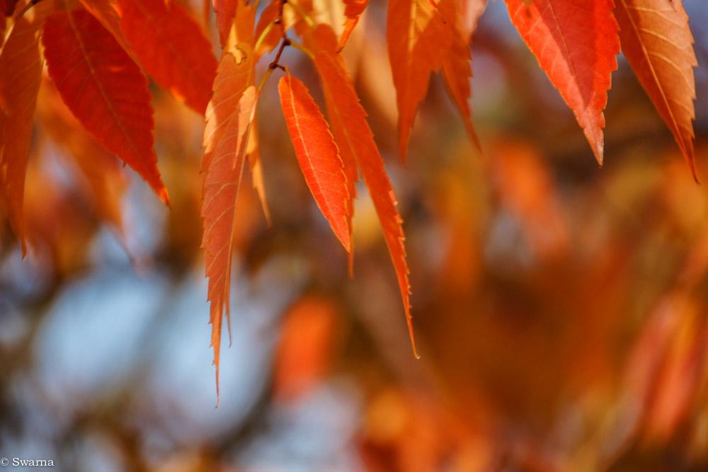 Fall Colours IV