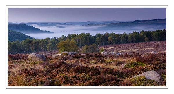 Treeline and Mist