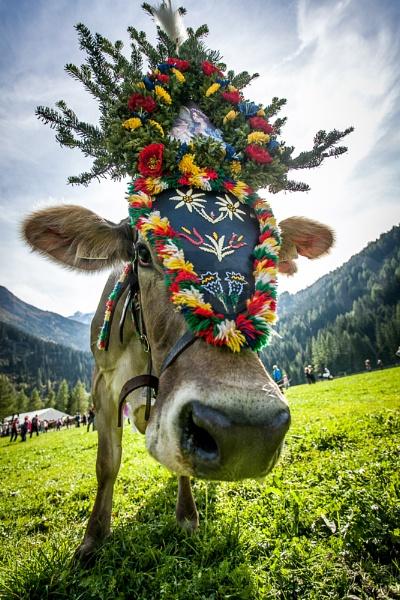 Moooooooooooo - Austrian Style! by ade_mcfade