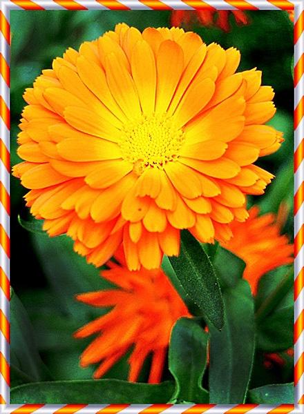 "\"" Orange \"" by tmimages"
