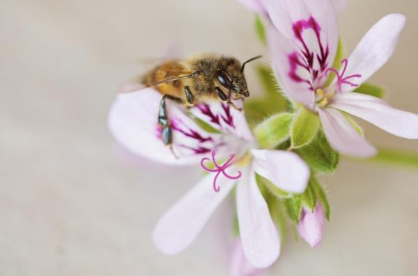 Happy Bee by janenewhitty