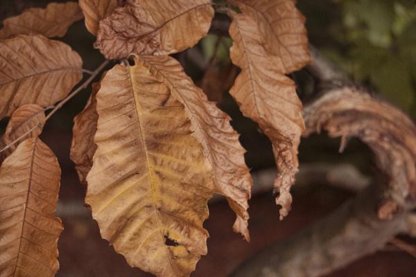 Autum leaves by Armando21