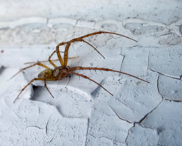 """Supersticious Spidy  \""""I must not step on the cracks\"""" by leecool"""