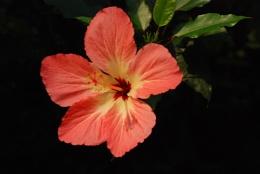 Rain forest flower.