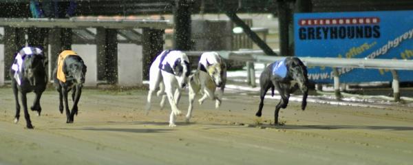 Greyhound racing by Ricardos