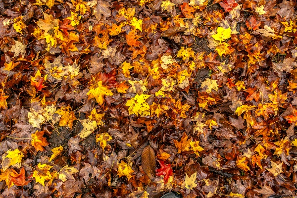 Autumn Leaves by guitarman74uk