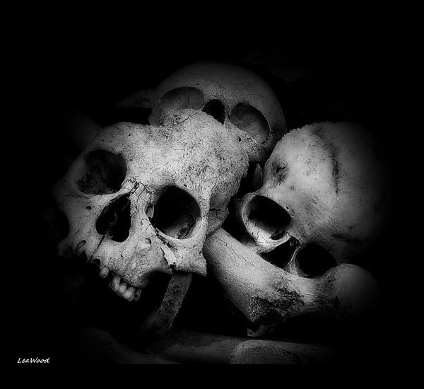 skulls by wood1963