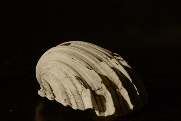 Kunene Shell by Msalicat