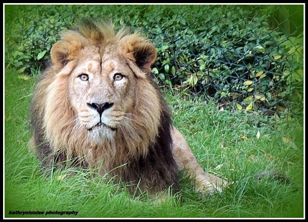 King Mwamba by kathrynlouise
