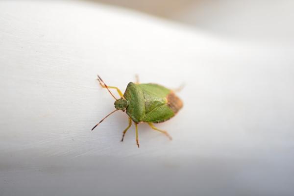 A bugs life by eddie1