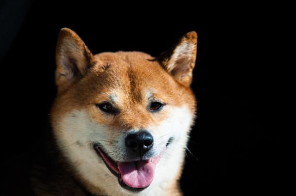Doggy by burd