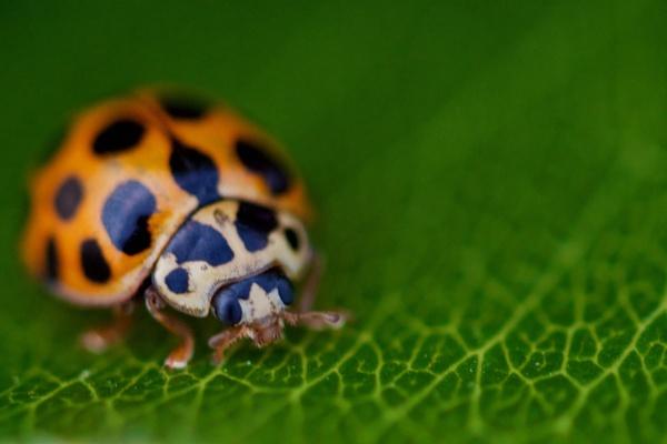 A Ladybird by janenewhitty