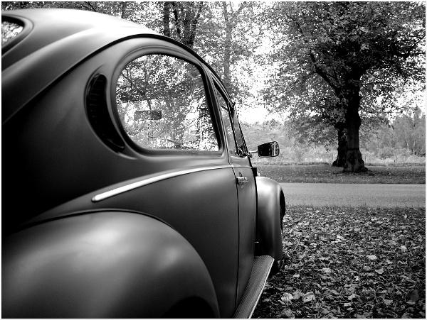 Beetle Day by danieltrude