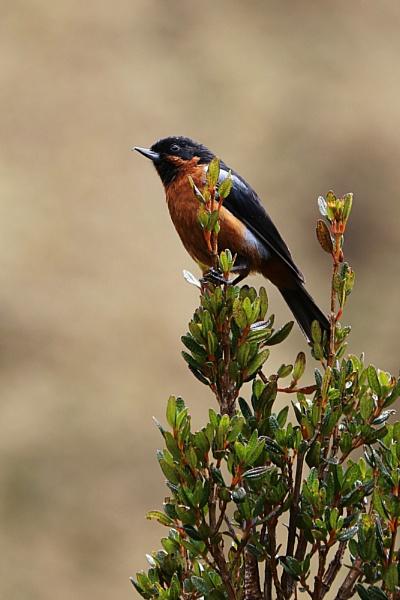 bird by grlloyd