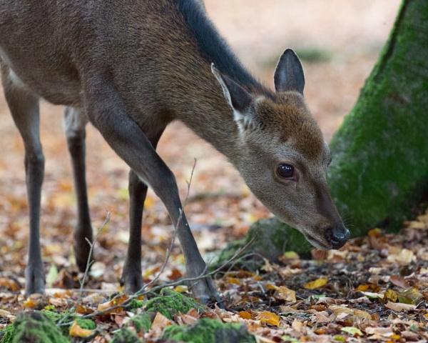 New Forest Deer by MarkBullen