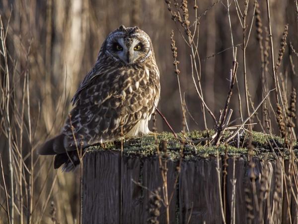 Owl on Stump by glimpsesborrowed