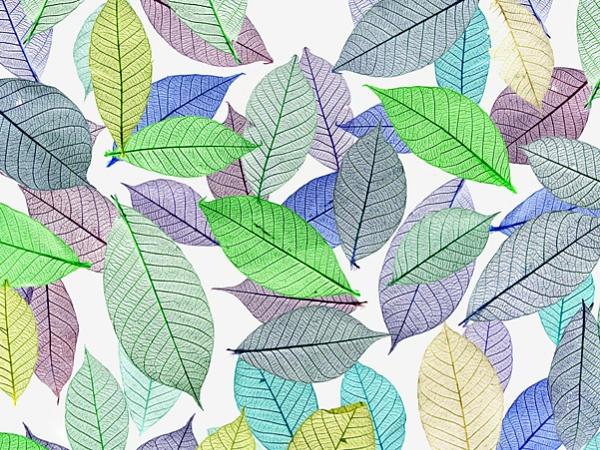 Leaves by victorburnside