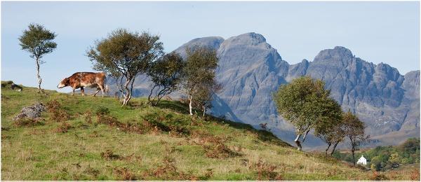 Mountain Moo... by Scottishlandscapes