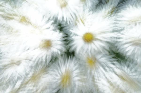 daisy dasy? by 23865