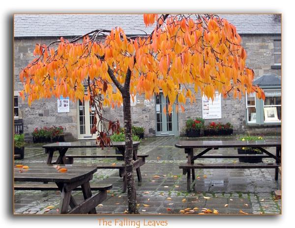 The falling leaves by Mavis