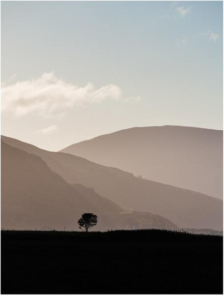 Lone Tree by Sue_R