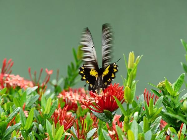 Flutterby by Mo_W