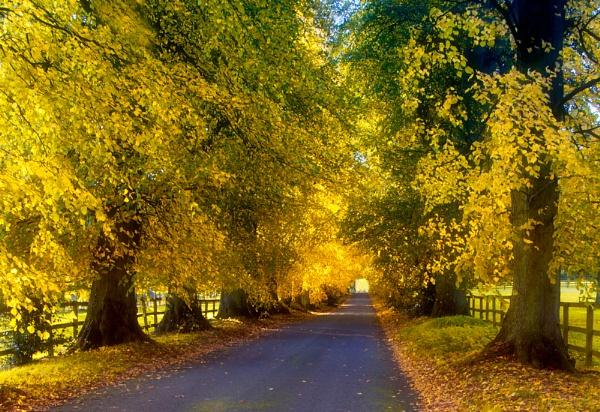 Woodland Way by SandraKay