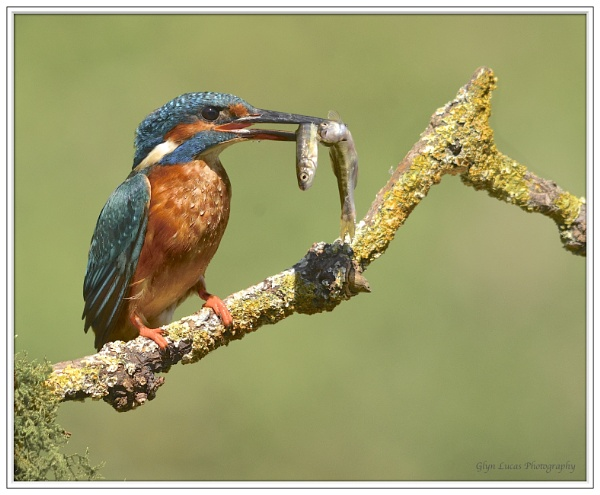 Catch of the day by Glyn1