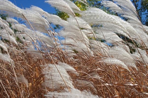 Prairie Grass by Qgrt