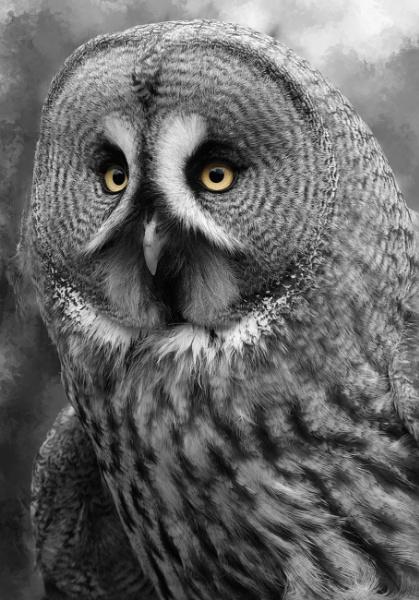 grey owl by photoflacky