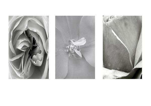 flowers by ireland