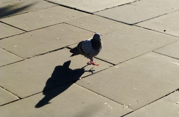Walking my shadow by Chinga