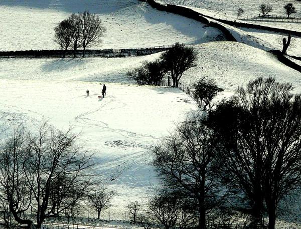 Winter Walk by brq