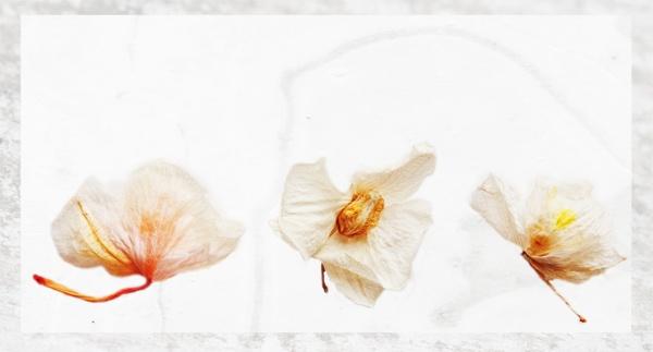 3 Orchids by Boleskine