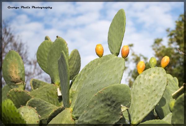 Prickly pears by GeorgePlatis