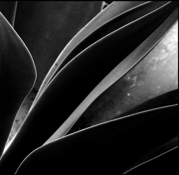 Aloe by Paulbee