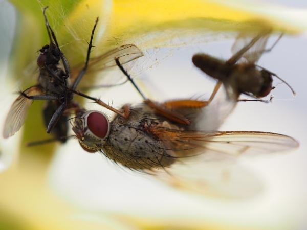 The Fly by Xmplary