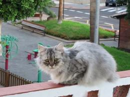 La gata en el balcón
