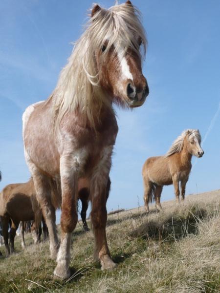 Wild Ponies by Spring2bok