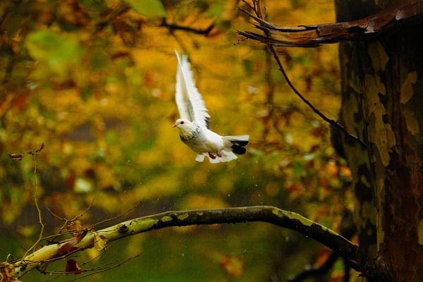 Wings by jimkon