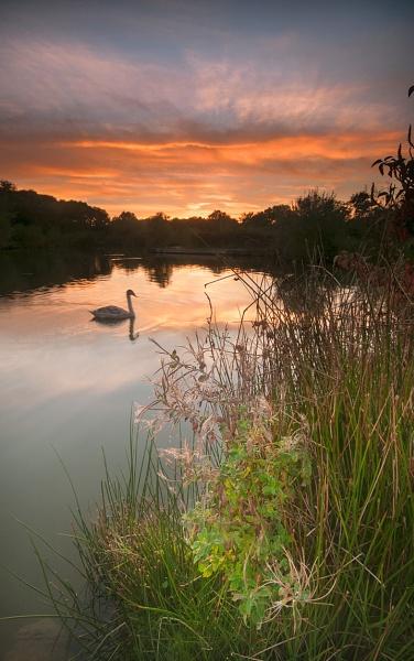Swan lake by ilocke