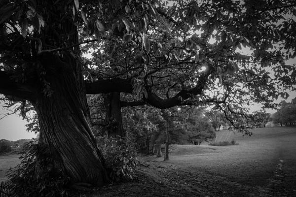 339 Malvern Common by Seonaid