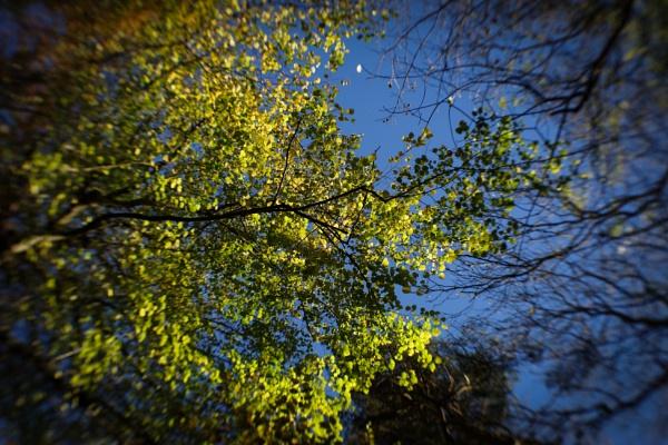 345 November Colour by Seonaid