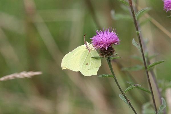 butterfly by ianto