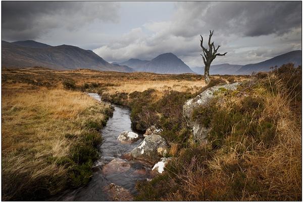 Lone tree Rannock Moore by ianto