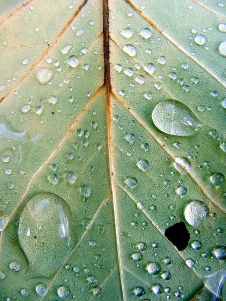 leaf by ireland