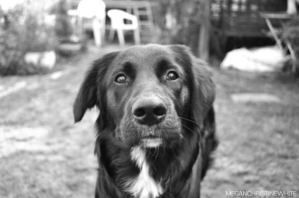 Rosie! by Meganwhitephotography