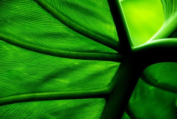 Green peace? by Chinga